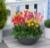Cây và hoa- Thay đổi phong thủy trong nhà