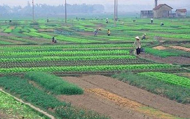 Chuyển đổi 26.000 ha đất nông nghiệp: Dân được lợi gì?